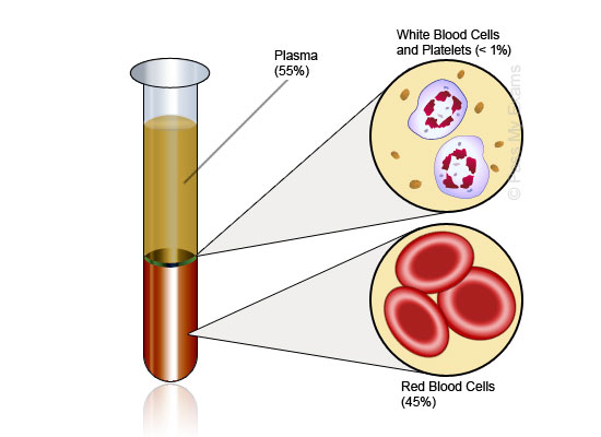 Platelets: active players in the pathogenesis of arthritis ... |Platelets Diagram Gcse